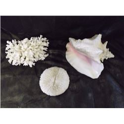 Natural White Coral Reef Specimens And Large Queen Conch Shell