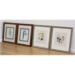 2 Pairs Botanical Colored Prints