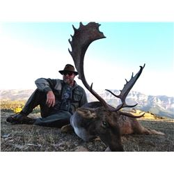 Spanish Fallow Deer Hunt for One Hunter and One Non-Hunter
