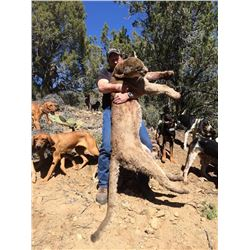 Mountain Lion Hunt with Hounds