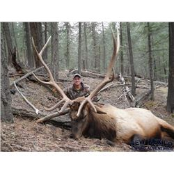 New Mexico Elk Hunt for 2x Hunters