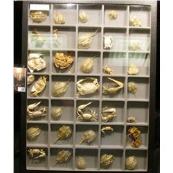 "Nice collection of various types of Crabs in a glass-faced frame measuring 12"" x 16"" x 1"". Contains"