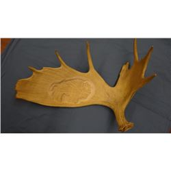 Carved moose antler, buffalo, B. K. Pettit