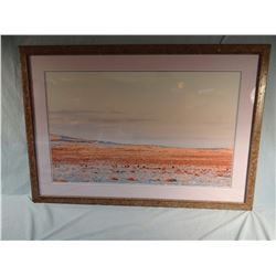 "Sage Grouse photo, 21"" x 34"", framed"