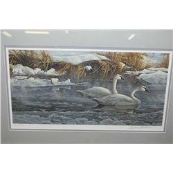 """Framed limited edition print """"Morning on the River-Trumpeter swans"""" pencil signed by artist Robert B"""