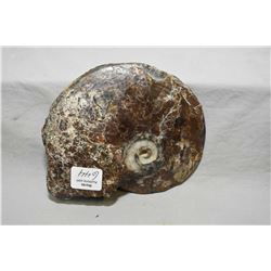 """Large ammonite fossil found in S.W Alberta 5 1/2"""" in width and 4 1/2"""" wide"""