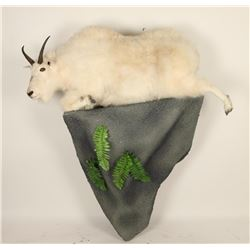 Full Mounted Mountain Goat