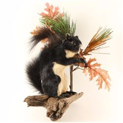 Full Mount Fox Squirrel