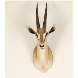 Small African Game Animal Mount