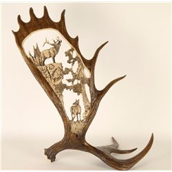 Beautiful Moose Antler Decorator