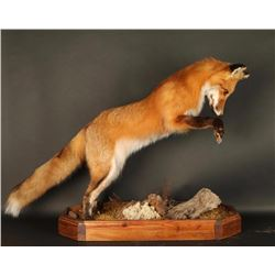 Full Mount Red Fox