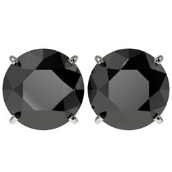 5 CTW Fancy Black VS Diamond Solitaire Stud Earrings 10K White Gold - REF-117X8T - 33145