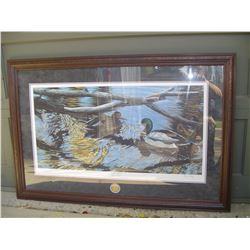 limited edition ducks unlimited print ,ducks by Darren Haley
