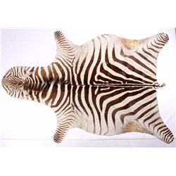 Taxidermy Zebra Hide Pelt Rug
