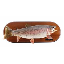 Montana Trophy Sized Rainbow Trout Real Skin Mount