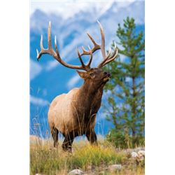 Rifle Rut Bull Elk Hunt