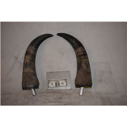BULL STEER BUFFALO BISON MATCHED PAIR OF HORNS 1
