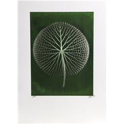 Jonathan Singer, Giant Green Amazon Waterlily on Dark Green, Digital Photograph