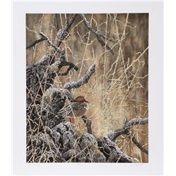 Chris Forrest, Green Winged Teal, Lithograph