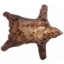 Montana Cinnamon Black Bear Taxidermy Rug