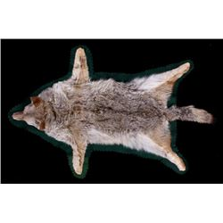 Montana Taxidermy Coyote Rug