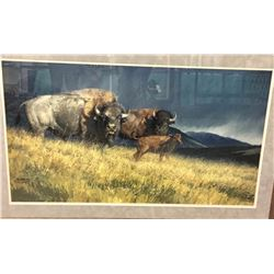 Limited Edition Buffalo Print - Glazier