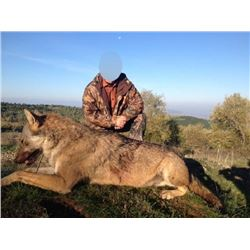 3 Day Wolf hunt in Macedonia, Serbia. Hunt is for 2 hunters or 1 hunter and 1 observer. Trophy fee d