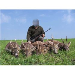 3 Day Roe Deer hunt for 2 hunters or 1 hunter & 1 observer in Serbia and 2 days of touring. Trip can