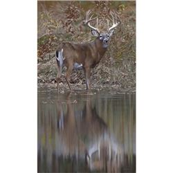 """""""Bunning Whitetail"""" by Joshua Spies"""