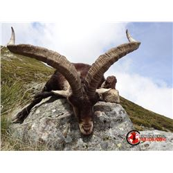 5 Day Hunt for a bronze Rhonda, Beceite or Southeastern Ibex in Spain