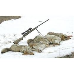 COYOTE CALLING HUNT FOR 2 HUNTERS IN EASTERN OREGON