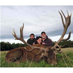 RED STAG HUNT IN SCOTLAND FOR 1 HUNTER