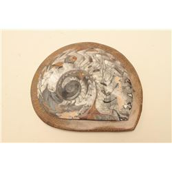 Rare large Ammonite fossil, approximately 10 x 12 overall; old