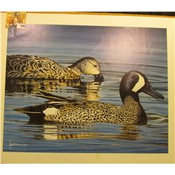 "13"" x 16"" Jes McDonald Print of a pair of Blue-winged Teal."