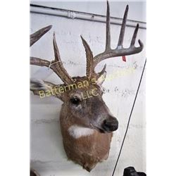 Whitetail Deer Full Head Mount