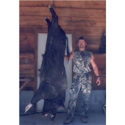 Wild Boar Hunt for up to 4 hunters on Florida's Gulf Coast.
