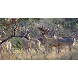 5 Day Hunt for Carmen Mountain White Tail Deer in Coahuila, Mexico