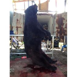 Five Day Black Bear Hunt/Fishing Combo for 1 Person