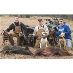 Florida Wild Boar hunt with Bay Dogs