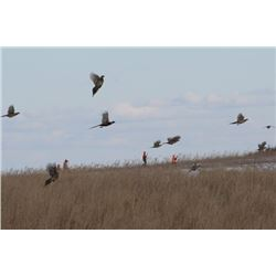 Two Day/Two Night South Dakota Pheasant Hunt
