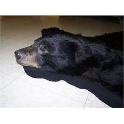 Michigan –Bear Skin Rug
