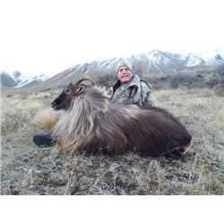 New Zealand Bull Tahr Hunt