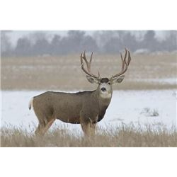 Swan Mountain Outfitters - 5-day hunt off of horseback for one hunter.