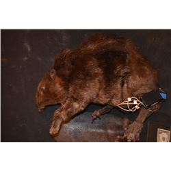 ZOMBEAVERS ANIMATRONICE HERO TRANSFORMATION PUPPET SCREEN MATCHED!