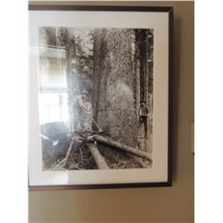 Photograph of Men Cutting Large Tree $50 to $100