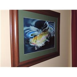"""Photograph, """"Rainbow Trout"""" by Keith J Kodou 16""""H x 22.5""""W Signed. $45 to $90"""