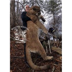 Colorado Mountain Lion Hunt with Needle Rock Outfitters