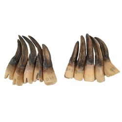 Underworld: Rise of the Lycans Lycan Nails Movie Props