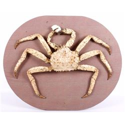 Taxidermy Alaskan King Crab Real Shell Wall Mount