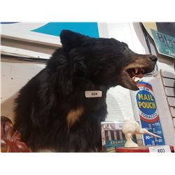 TAXIDERMY BEAR MOUNT